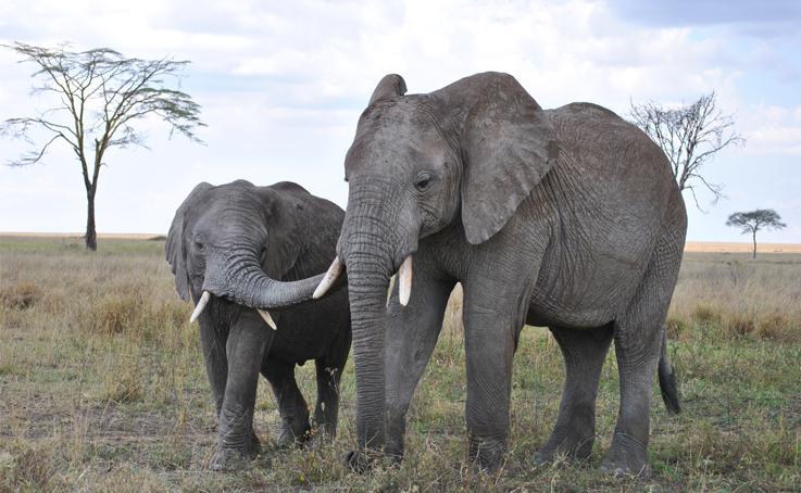 Tierschutz – Elefanten schützen